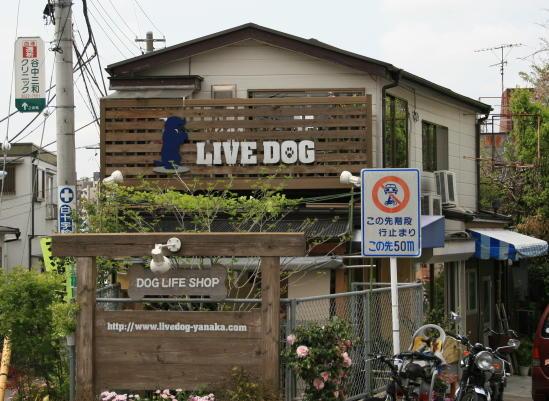 Live Dog